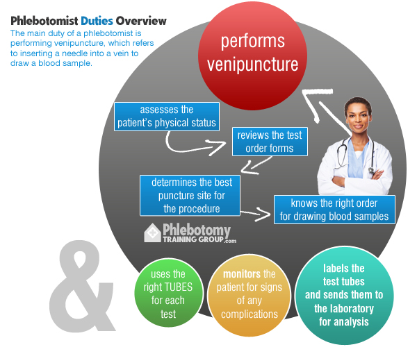 Venipuncture, the main duty of a phlebotomist.